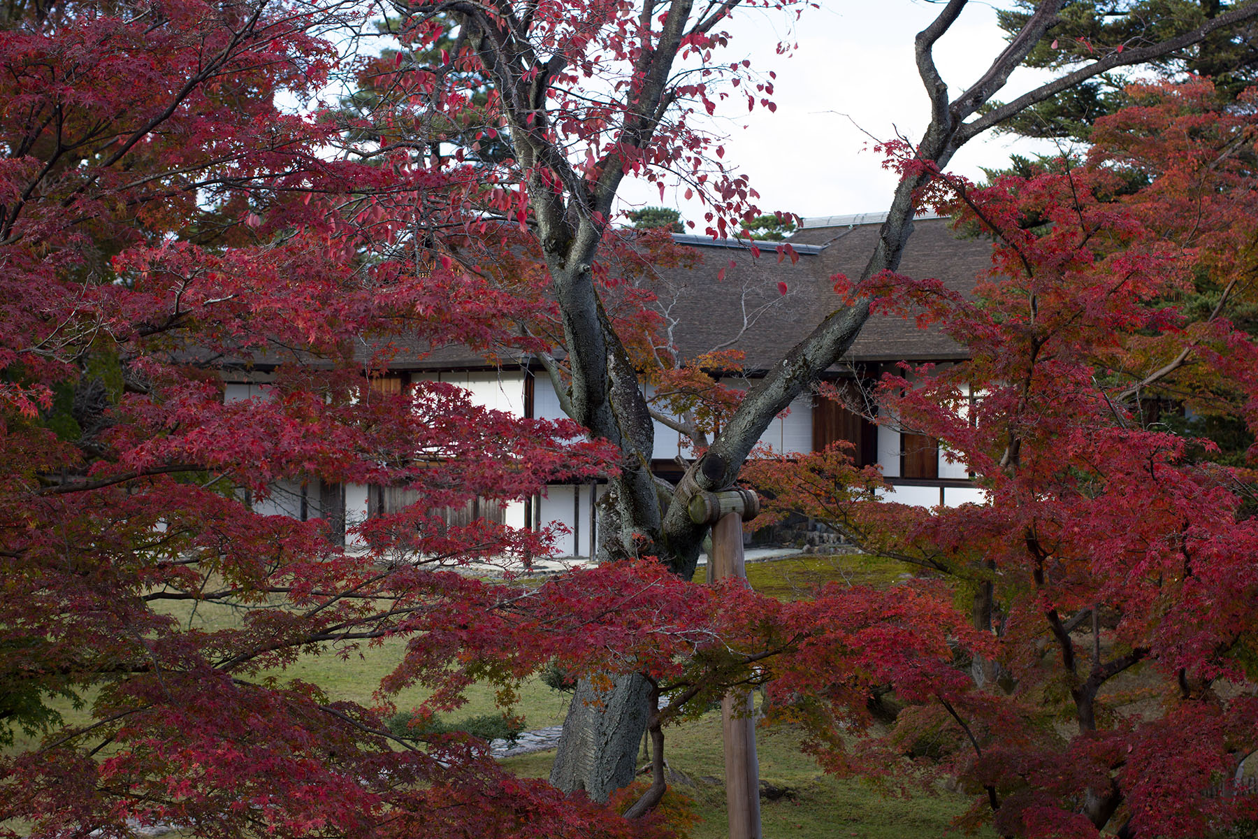 Katsura Imperial Villa through autumn trees